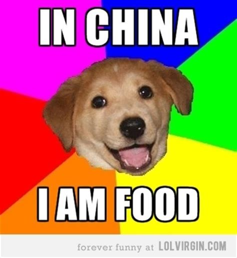 Asian Dog Meme - 17 best images about awesome things on pinterest haha meme hipster dog and asian parents
