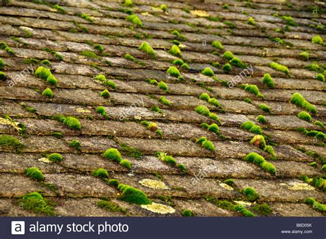 Old Slate Roof With Green Moss Grassmere Lake District Cool Metal Roofing Tin Roof Charleston Insulated Panels Shelterguard Red Wilmington De Anchors For Fall Protection Cleaning Miami Jeep Cherokee Rails