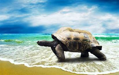 Turtle Wallpapers Sea Beach Animal Turtles Backgrounds