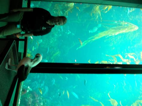 A day trip to the Monterey Bay Aquarium