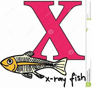 animal alphabet x x ray fish royalty free stock image With animal alphabet letter x
