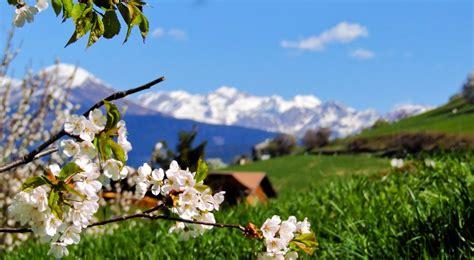 fruehlingserwachen guenstiger urlaub im april putzerhof