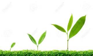 Plant Growth Hormones