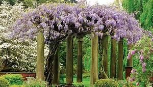 Plantes D Ombre Extérieur : plante grimpante ombre pour pergola de jardin ~ Melissatoandfro.com Idées de Décoration