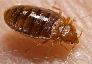 Parasite in city all bing for Bed bug be gone