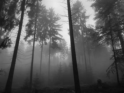 Forest Dark Night 4k Desktop Wallpapers