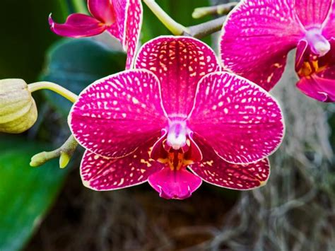 Kitchen Rehab Ideas - how to keep your orchid looking great diy network blog made remade diy