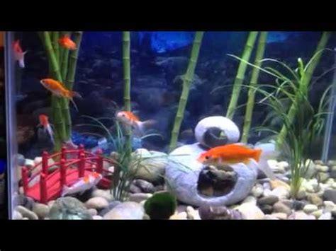 Japanese Themed Aquarium Youtube