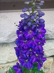 Tall Plant with Purple Flowers