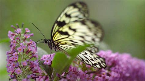 Natur Im Garten Schmetterlinge Anlocken Gabotde