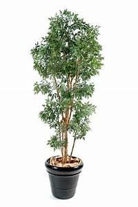 Plante D Intérieur Haute : plante interieur haute l 39 atelier des fleurs ~ Dode.kayakingforconservation.com Idées de Décoration