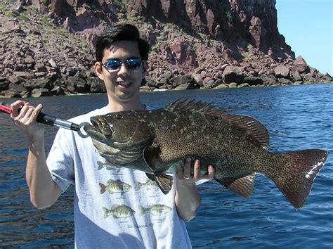 grouper leopard fish rare mackerel catch near fishing paz somewhat caught mexico howtocatchanyfish