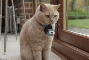 gps collar for cats the secret of a cat what mischievous moggies gets up