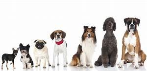 Gruppi Razze FCI classificazione razze canine Cuccioli Cane