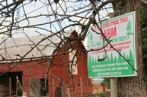 new york christmas tree farm fun rattles heels