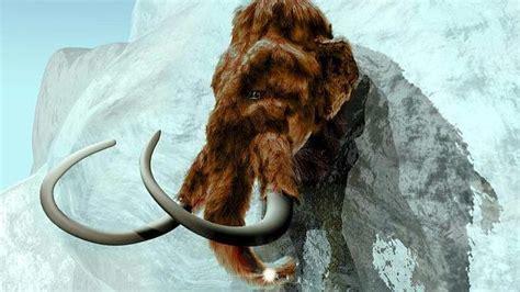 cientificos creen  podran resucitar   mamut dentro