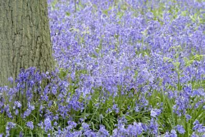 when should you plant lavender should i cut the dead flowers off of my lavender plant