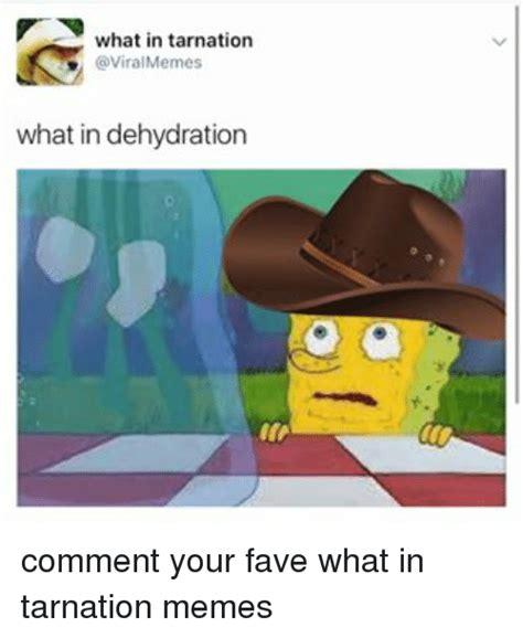 What In Tarnation Memes - what in tarnation memes mutually
