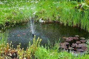 Tiere Im Gartenteich : welche teichpflanzen arten gibt es und was ist zu beachten ~ Eleganceandgraceweddings.com Haus und Dekorationen