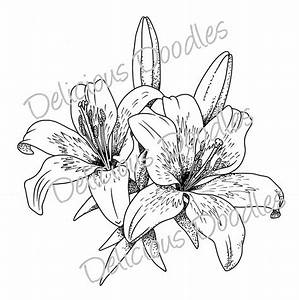 Stargazer Lily Sketch | Teri's World: Lovely Lillies | Ink ...