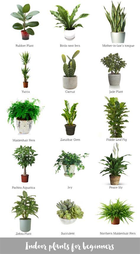 best office desk plants indoor plants for beginners katrina chambers plants