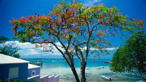 tropical escape bahamas   fonds decran hd