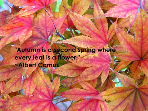fall season quotes fall quotes autumn quotesgram