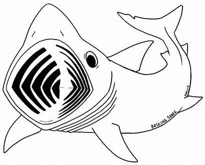 Shark Coloring Megalodon Clipart Ausmalbilder Whale Sharks
