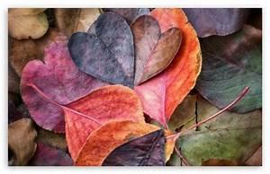 Fall In Love 4K HD Desktop Wallpaper for 4K Ultra HD TV ...