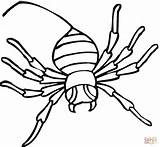 Spider Coloring Pages Widow Printable Drawing Clipart Supercoloring Dot sketch template