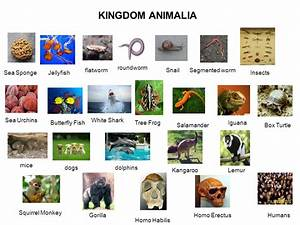 Kingdom Animalia | www.imgkid.com - The Image Kid Has It!