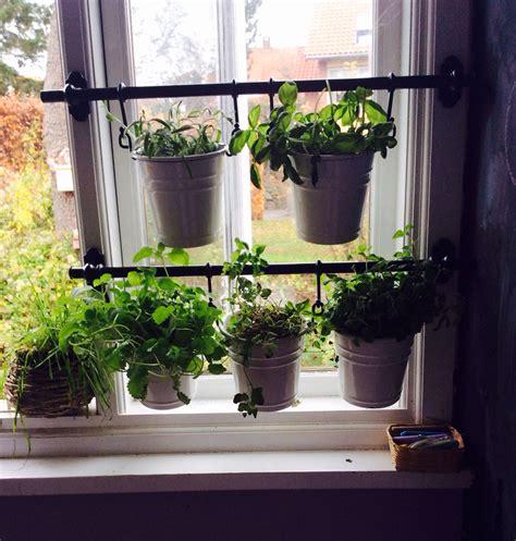 Window Sill Garden Vegetables by A Tiny Winter Herb Garden In My Kitchen Home Herb