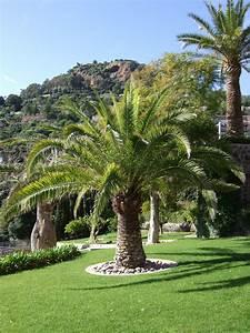 taille de palmier entretien jardin espaces verts cannes With photos amenagement jardin paysager 13 terrassement ent soulenq amenagement paysager