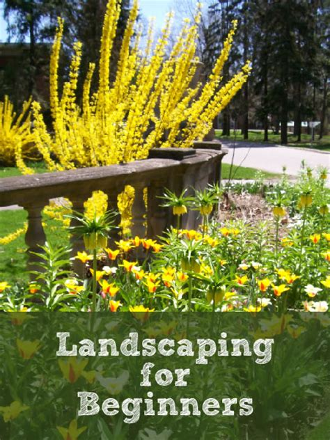 Landscaping Tips For Beginners  Newlywed Survival