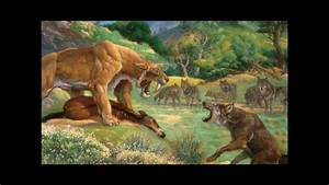 Dire wolf vs Saber Tooth Tiger - YouTube