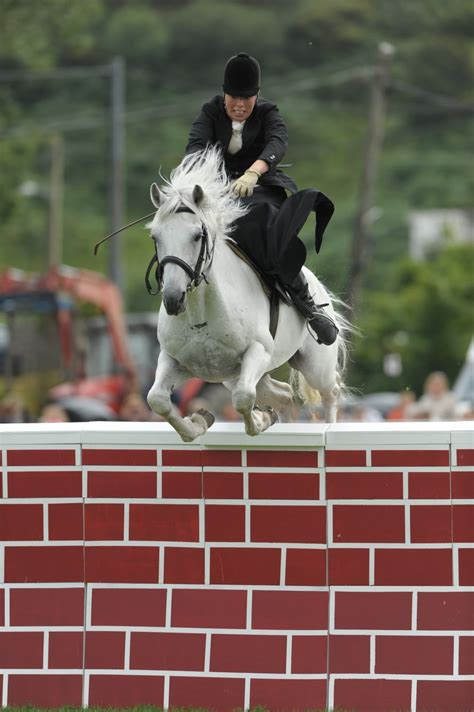 connemara pony side height highest saddle jumped puissance record sparrow bobby stallion society breeders wall cb3