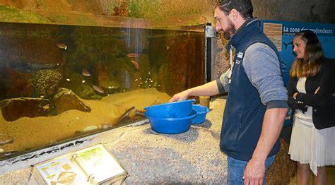 aquarium plongeon dans les bassins lannion letelegramme fr