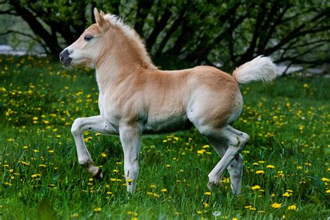 im 225 genes de paisajes con animales
