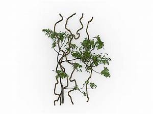 Climbing Vines 3d Model 3ds Max Files Free Download