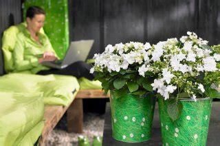 Der Garten Als Sinnbild by Geh 246 Ren Zum Guten Leben Dazu Laptop Topfpflanze