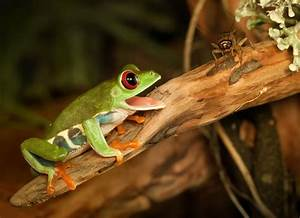 What Do Frogs Eat? | What to Feed to Frogs | petMD