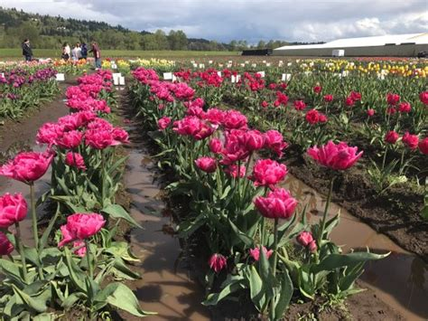 photo1 jpg picture of america bulb farms