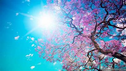 Nature Spring Wallpapers Crazy 1366 768 Backgrounds