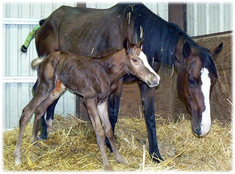 baby born colt horse boy horses ccspca california spca