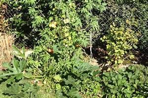 Tomaten Im Hochbeet : tomaten pflanzen tipps tomaten auf dem balkon pflanzen tipps zur richtigen tomaten balkon ~ Whattoseeinmadrid.com Haus und Dekorationen