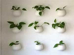 Pflanzen An Der Wand : h ngende pflanzen als indoor dekoration ~ Articles-book.com Haus und Dekorationen