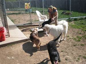 Dog holiday kennel pet sitting 5588 wood rd holley for Dog holiday kennel