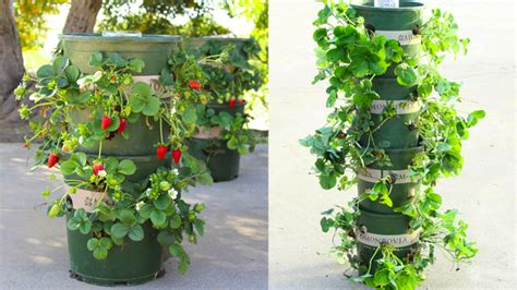 make a strawberry tower with built in water reservoir
