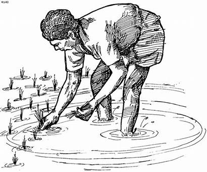 Farmer Indian Clipart Coloring Pages Farmers Drawings