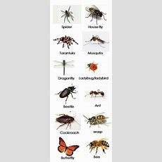 Насекомые поанглийски #english #vocabulary #insect #английский #насекомые Vocabulary